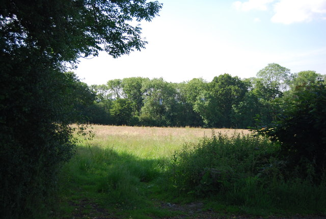 Meadow by Chiddingstone Rd