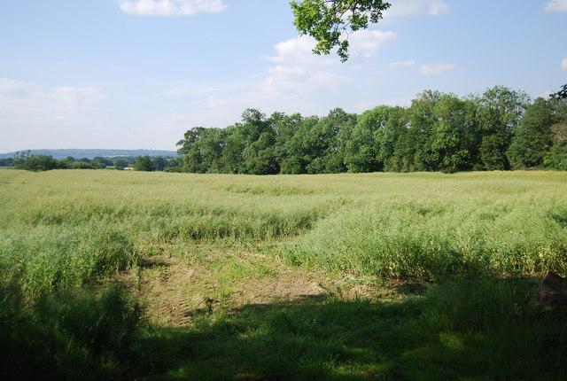 Field near Gilwyns