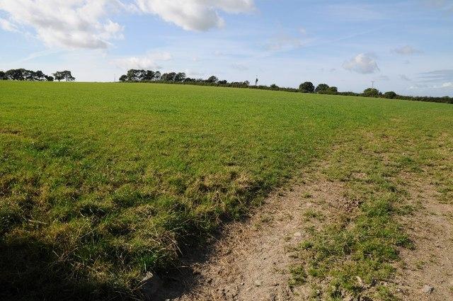Field near Cefn Berain
