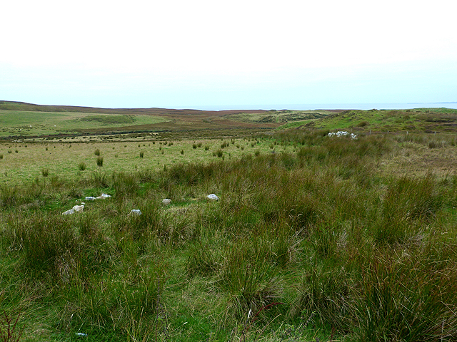 Marshy grassland by the Mull of Oa car park