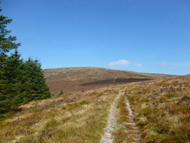 Edge of plantation at Bardrochwood Moor