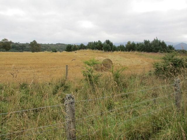 Farmland near Coylumbridge