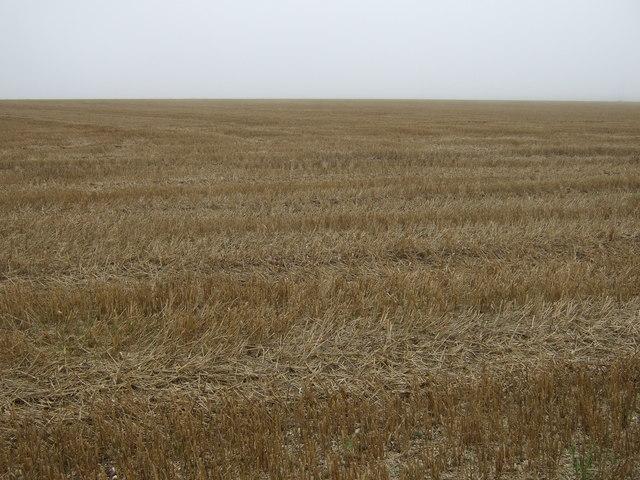 Haisthorpe High Field