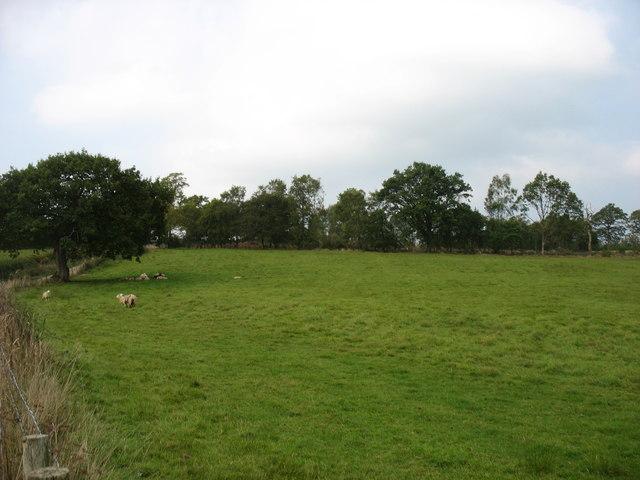 Country west of Smithfield Farm