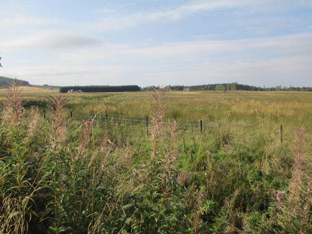 Rough grazing near Cromdale