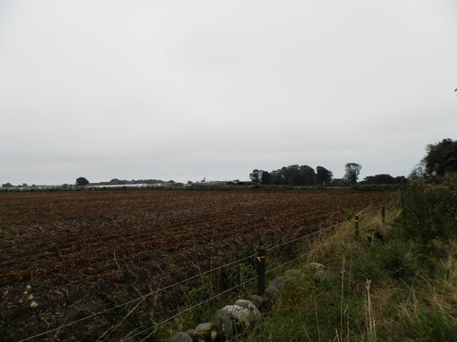 Field at East Scryne