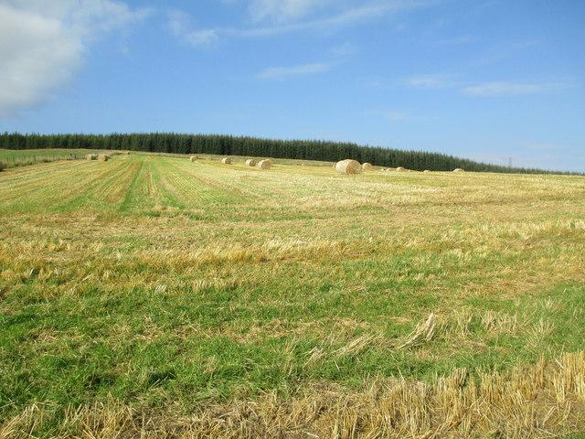 Harvest field at Easter Rynaballoch