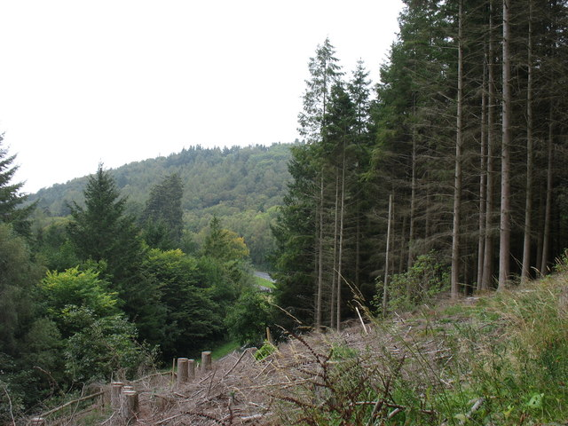 Forestry above the A470