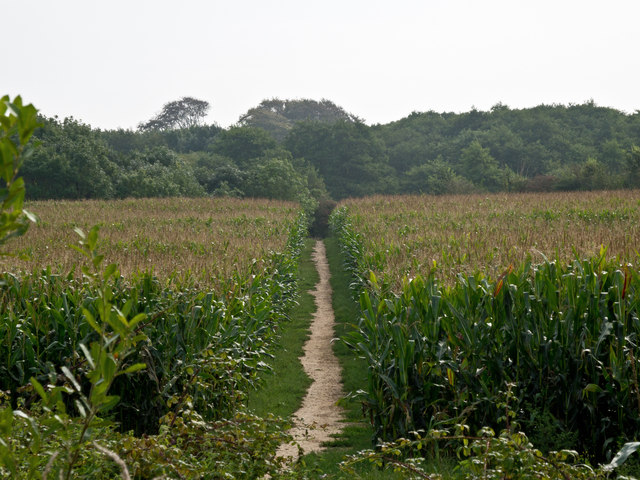 The Permissive Path between Chillpark and the Tarka Trail across a field of maize