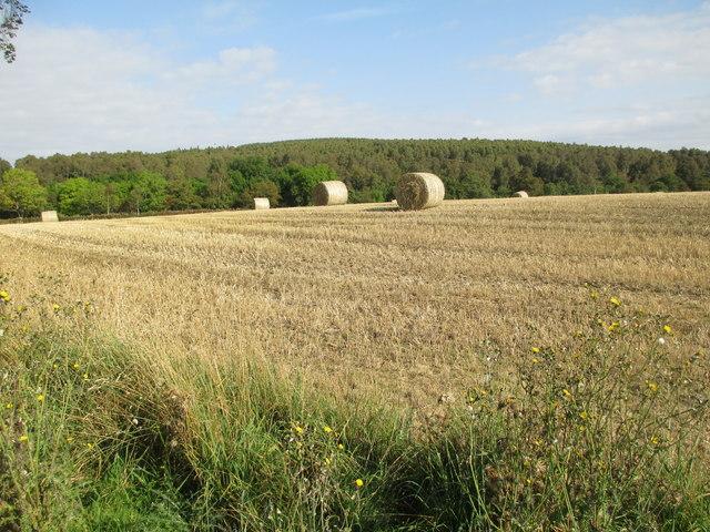 Harvest field at Millton