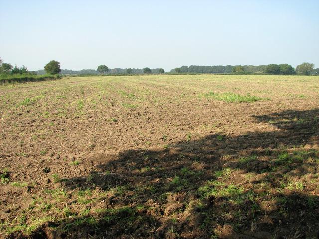 Fields north of Salhouse