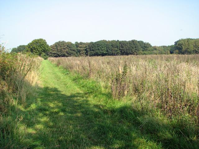 View towards Hagg Wood