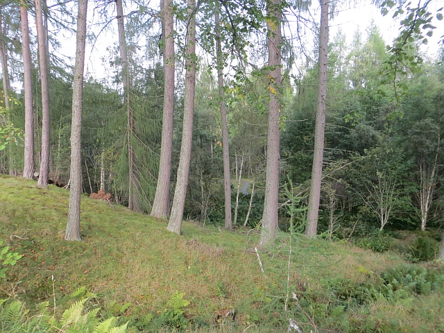 Woodland, Invereshie