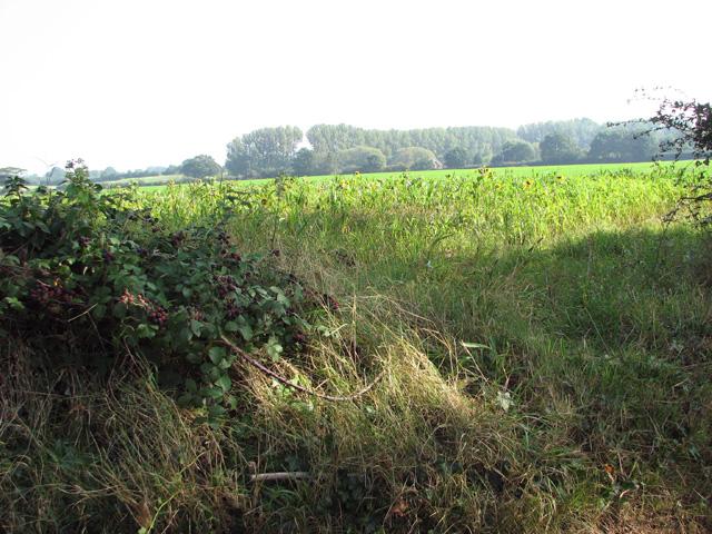 Crop fields by The Grange