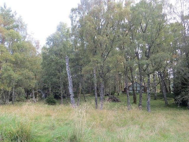 Woodland, Feshiebridge