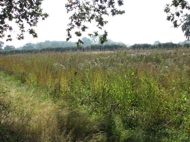 Field south of Long Lane
