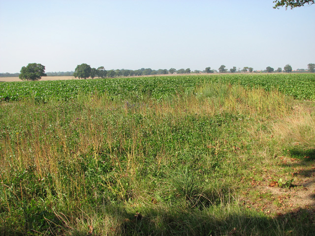 Crop fields south of Long Lane