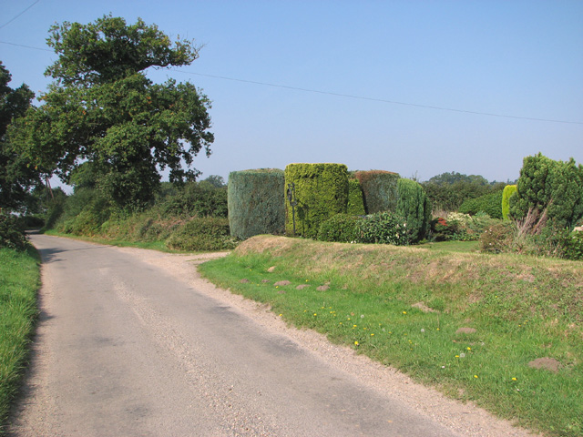 Topiary in a garden beside Long Lane