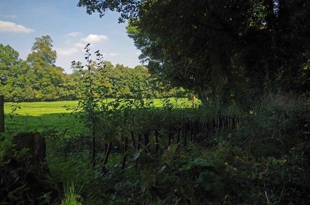 New Hedge September 2014