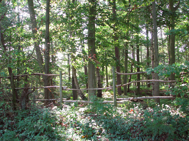 Fence on the edge of Long Covert