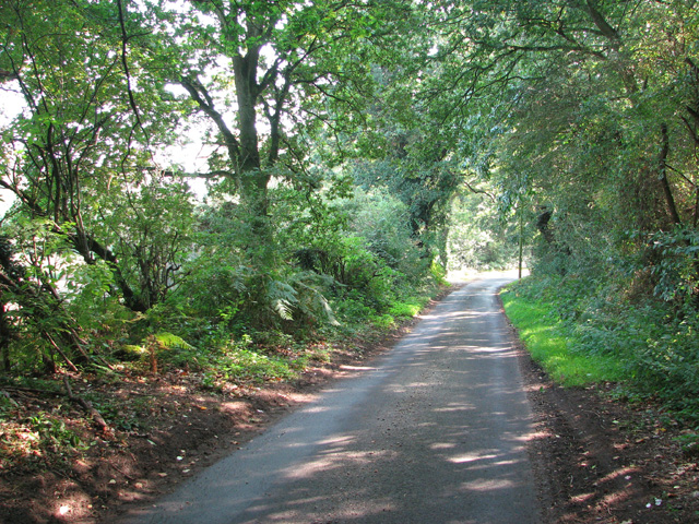 Long Lane past Long Covert
