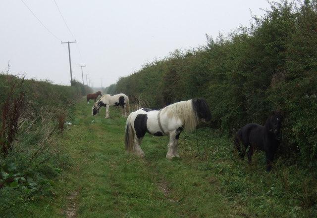 Traveller's horses on green lane