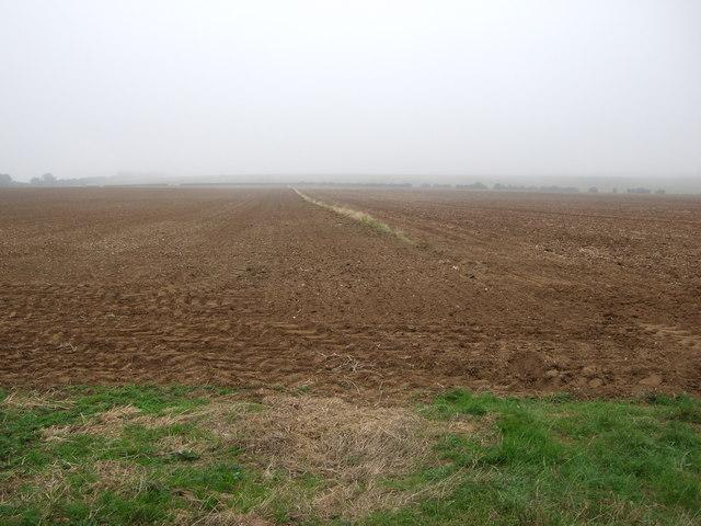 Farmland, Thornholme Field