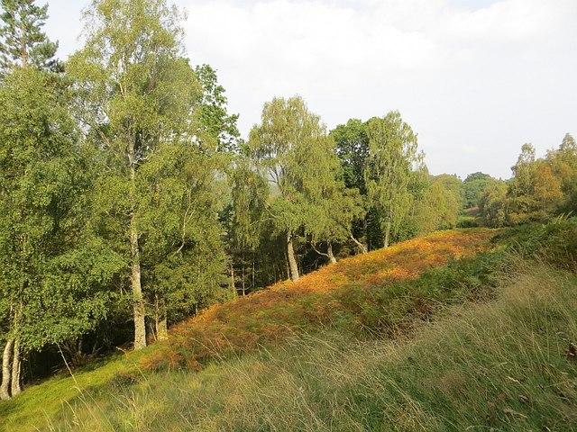 Bracken covered slopes