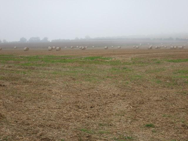 Thornholme Field