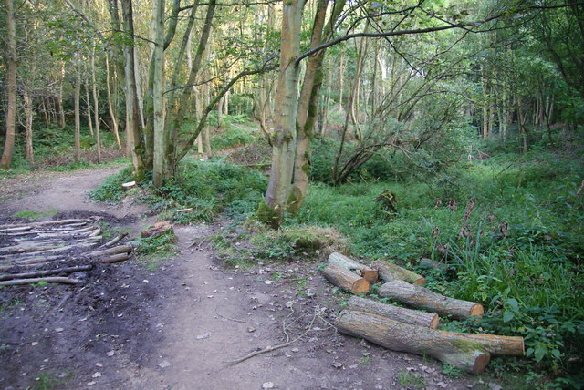 Dried up pond in East Arnecliff Wood