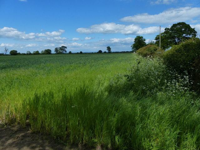 Farmland next to the B4455 Fosse Way