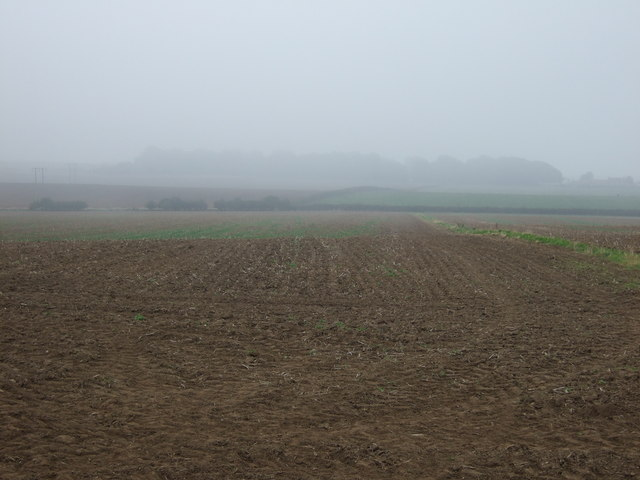 Farmland, Thornholme Field