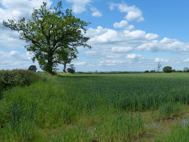 Farmland north of Cloudesley Bush