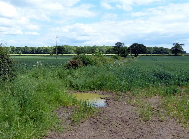 Farmland south of Cloudesley Bush