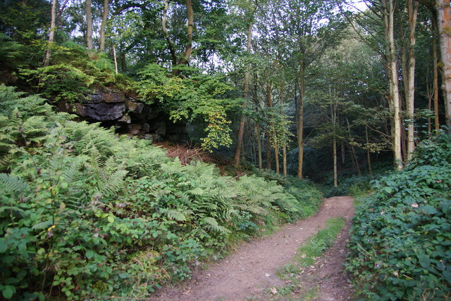 Path in East Arnecliff Wood