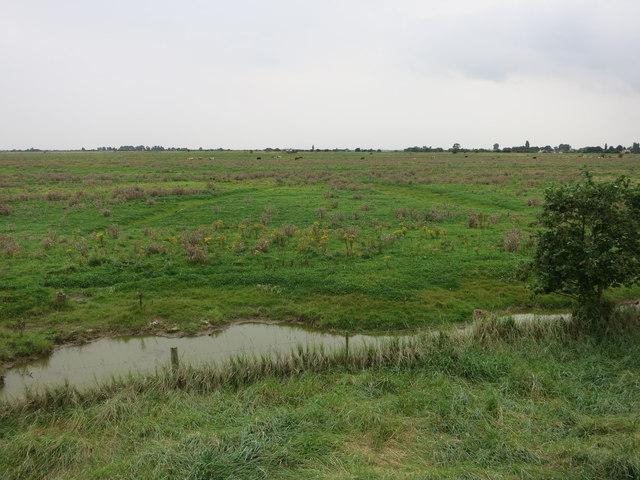 Grazing marsh at Freiston Shore