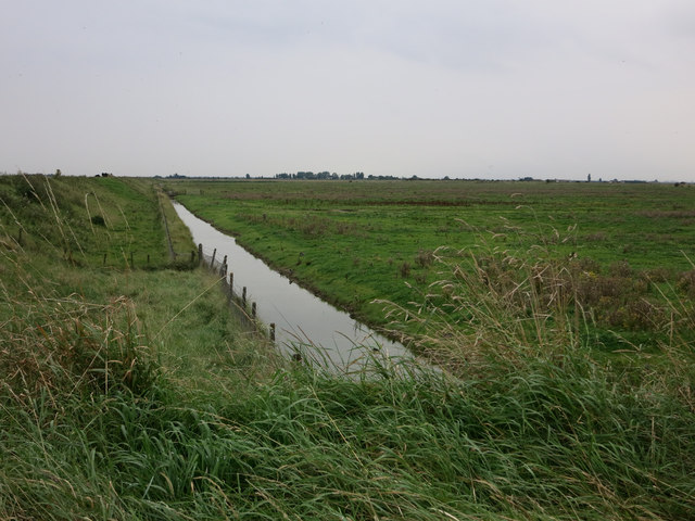 Grazing marsh at Freiston Shore