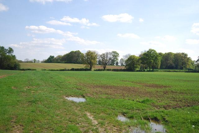 Countryside near Ockley Court