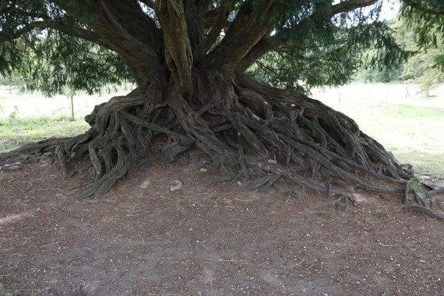 Roots on the tree