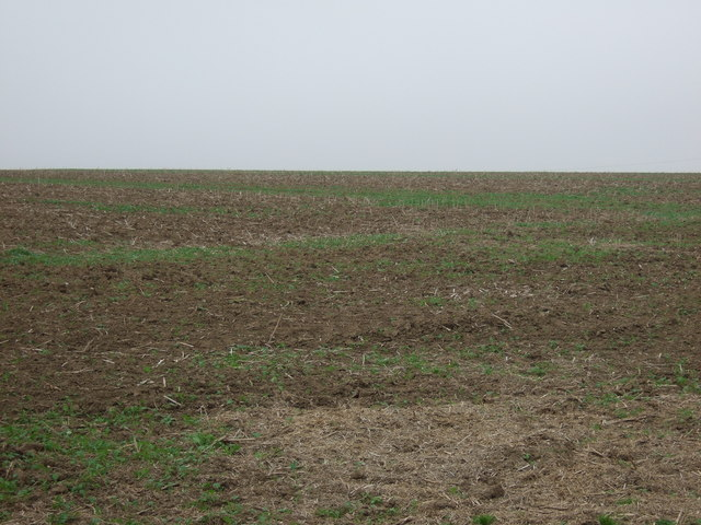Thornholme Field