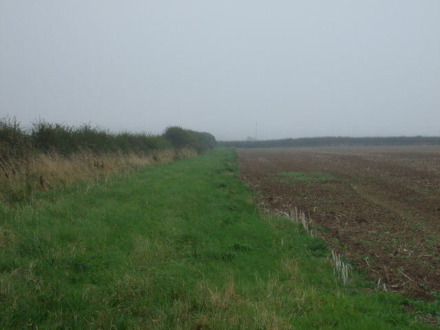 Field margin and hedgerow