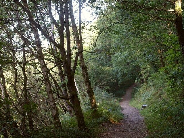 Track, Kilminorth Wood