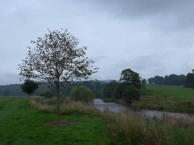 The River Wharfe by Tough Bank