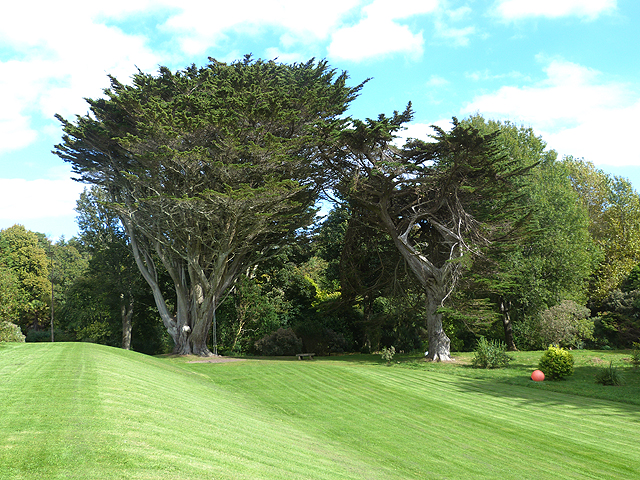 Cypress trees and lawn at Colonsay House
