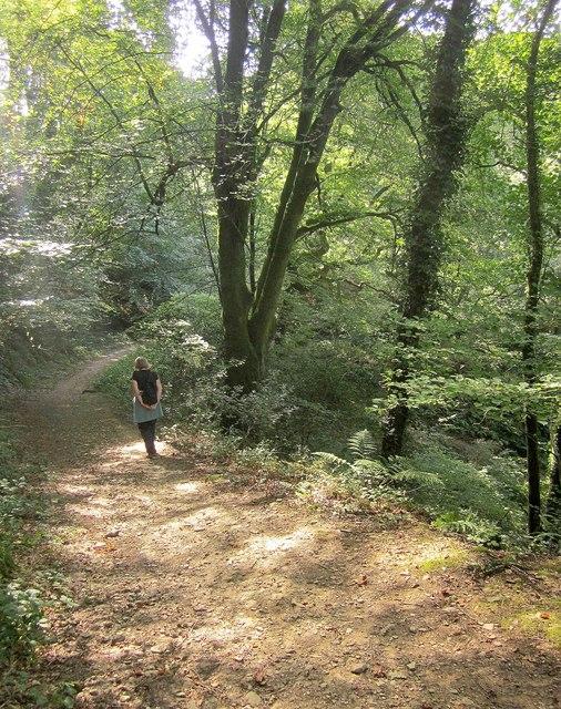 Path, Kilminorth Wood