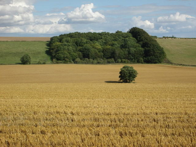 Wheat field, Wexcombe
