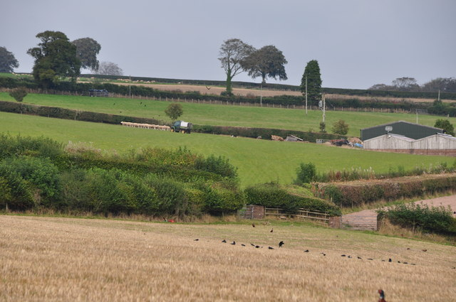 West Somerset : Grassy Field & Countryside