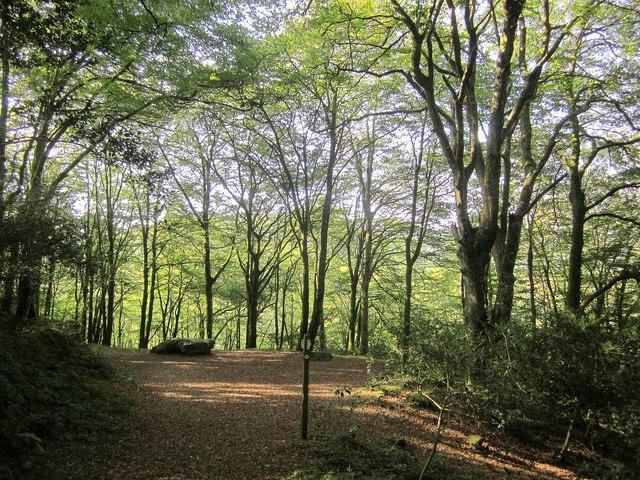 Path junction, Kilminorth Wood