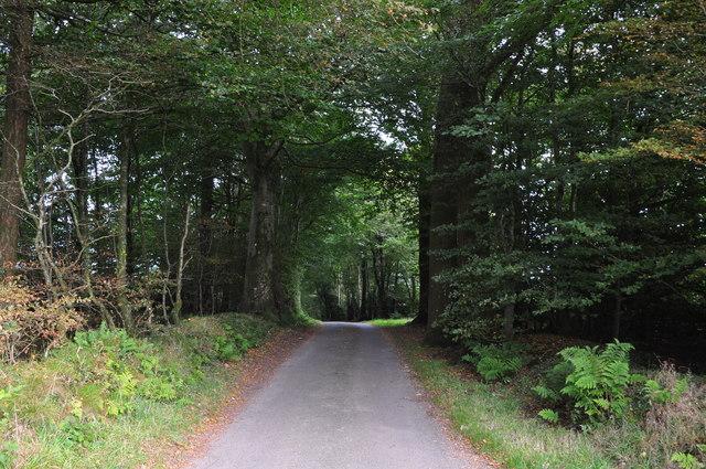 Taunton Deane District : Country Lane