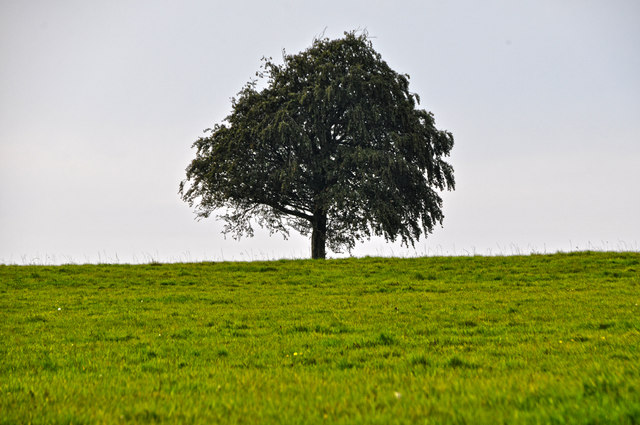 Taunton Deane District : Grassy Field